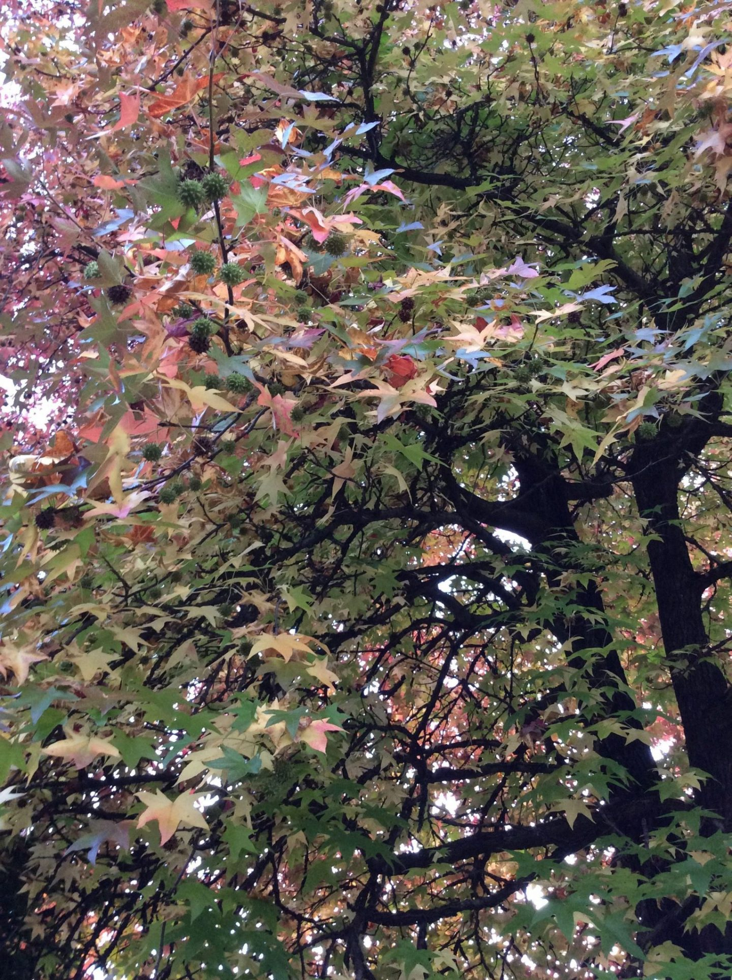 IMG 2729 1440x1928 - Autumn and trees