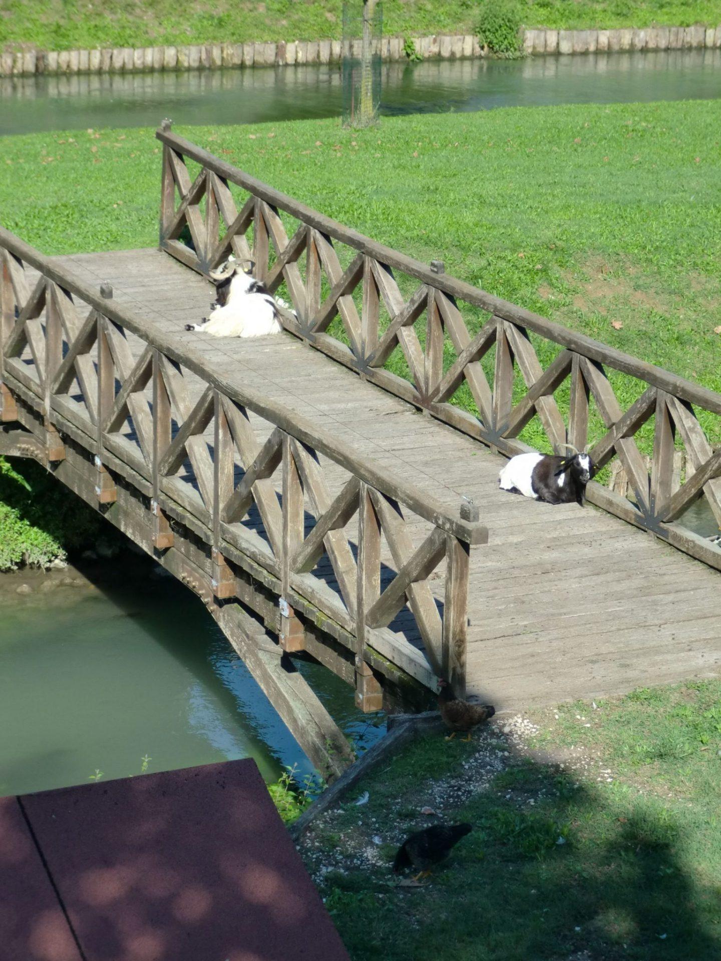 Treviso parco 7 1440x1920 - Treviso: Italian beauty