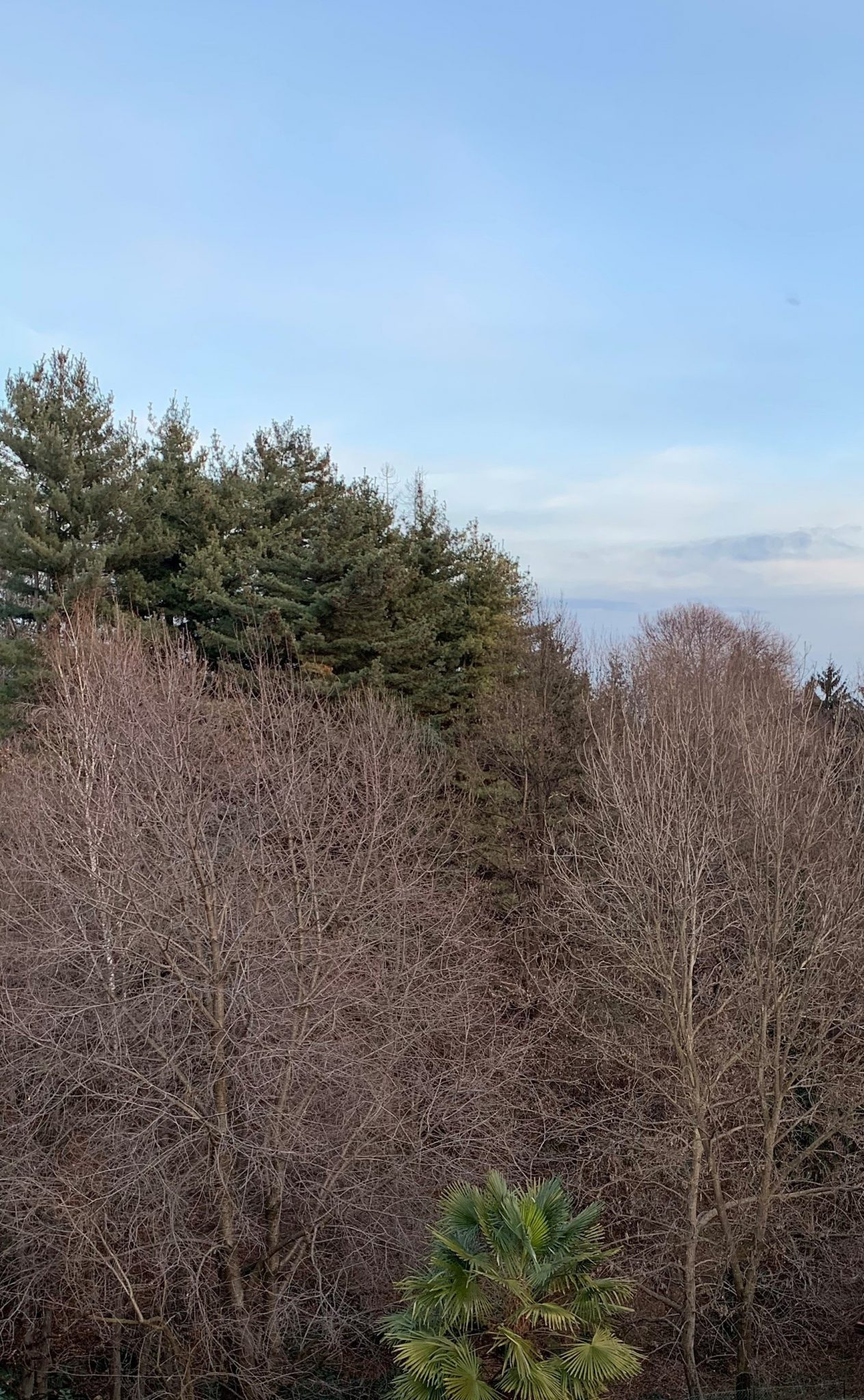 iPhone XR camera trees sky