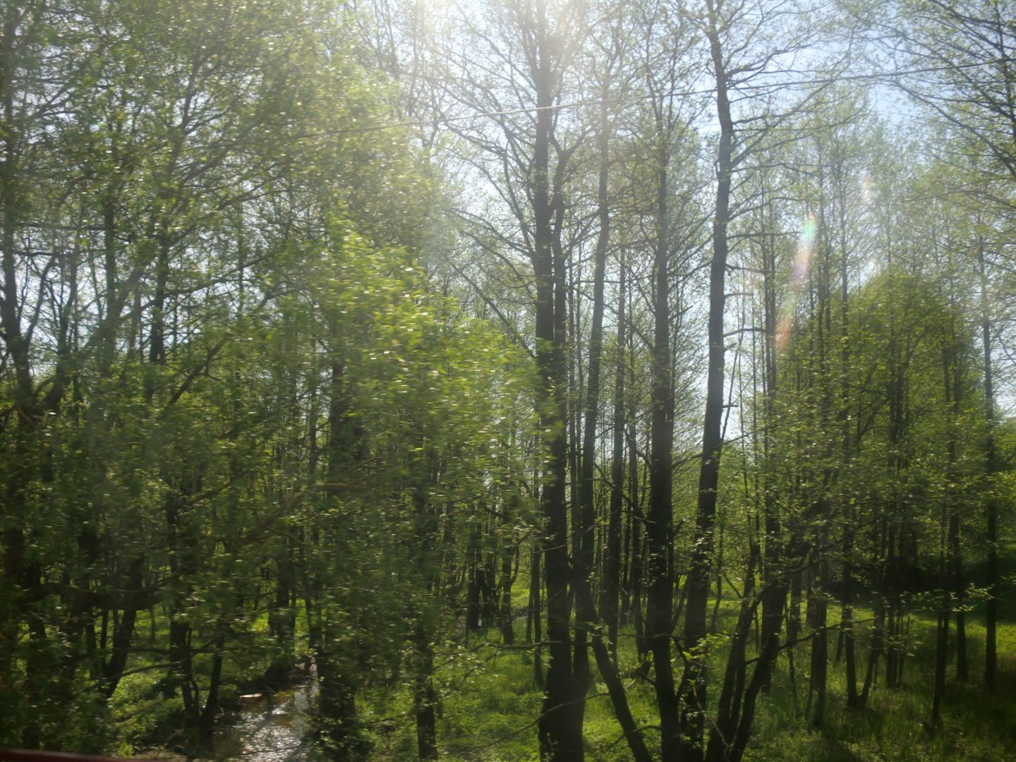 From Vilnius to Minsk by bus: 1 cool trip you should do - A tree in a forest - Mombacho